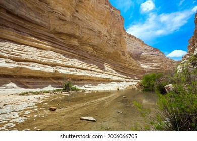 The shallow lake in the canyon is overgrown with grass. The gorge Ein Avdat is formed by the Qing River in the Negev desert. Israel. The concept of active and photo tourism