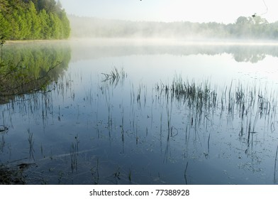 Shallow lake overgrown with water plants