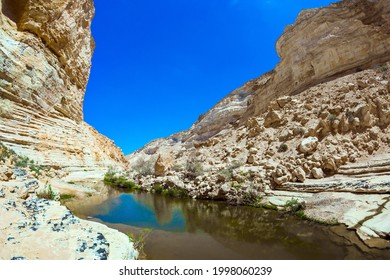 Shallow puddle in the canyon overgrown with grass. The gorge Ein Avdat is formed by the Qing River in the Negev desert. Israel. The concept of active and photo tourism