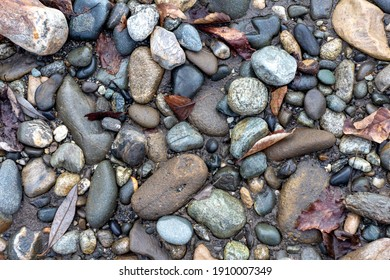 A shallow river, a rocky bottom with a dry riverbed against the background of autumn weather in nature and small pebbles.