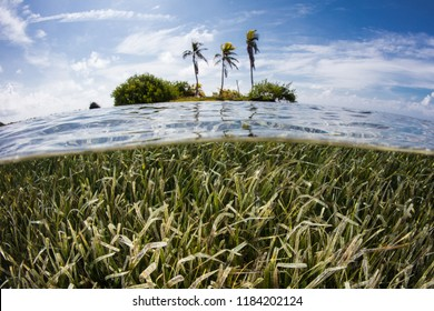 A shallow seagrass meadow surrounds a tropical island on the Mesoamerican barrier reef off the coast of Belize. This part of the Caribbean Sea harbors hundreds of fish species and dozens of corals.