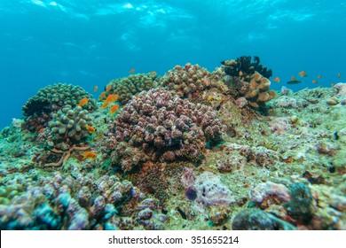 Shallow Water Coral Reef, Maldives