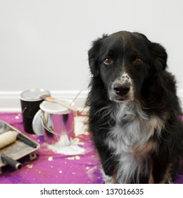 a shame faced dog at the scene of a messy painting project