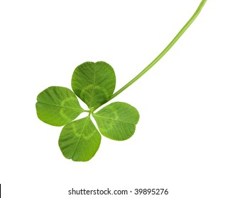 Shamrock four leaf clover isolated on white