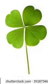 Shamrock leaf