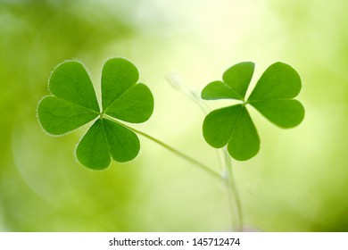Shamrock - Three leaf clover against green background