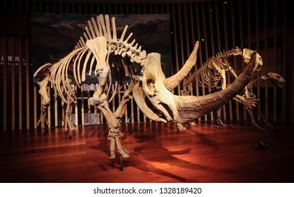Shanghai, China - April 13 2018, Fossil of woolly rhinoceros (Coelodonta antiquitatis) at Shanghai Natural History Museum. Woolly rhinoceros extinct during last glacial period around 10,000 years ago.