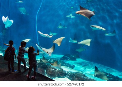 SHANGHAI OCEAN AQUARIUM, SHANGHAI, CHINA September 25, 2016: The Shanghai Ocean Aquarium is a popular attraction for tourists and local families.