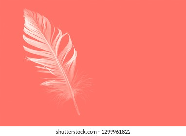 shape of a bird feather on a living coral background, color of the Year 2019