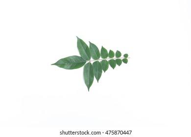 shape leave on white background