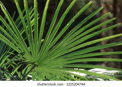 Shape of Palm leaves