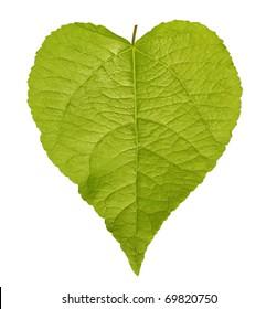 Shaped green leaf heart shape isolated on white