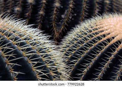 Shapes of Cacti Close Up