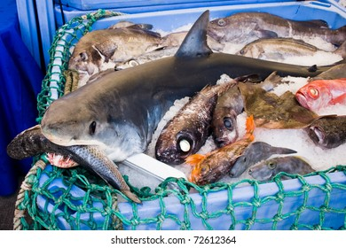 Shark in a basket with other on fishmarket in Auckland, New Zealand