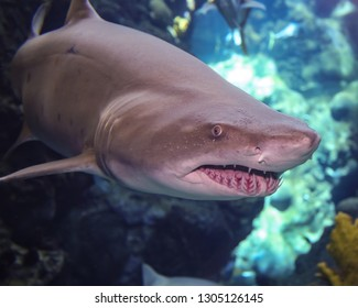 Shark Closeup at Florida Aquarium