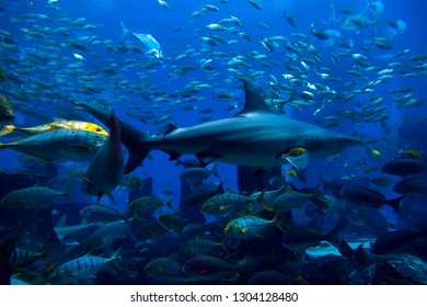 Shark diving in the blue Sea, Ocean sharks swimming hunting in the deep blue water, side view Soft focus off.