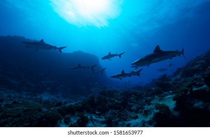 The shark diving underwater photography