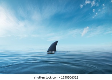 shark fin on surface of ocean agains blue cloudy sky