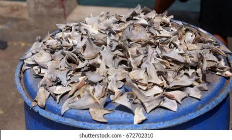 Shark fins on the fish market