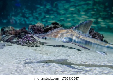 Shark and fish tank in an aquarium visited by tourists.