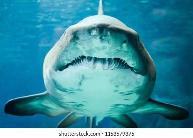 Shark found in Aqarium