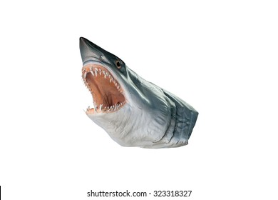 shark head model isolated on white background  with clipping path