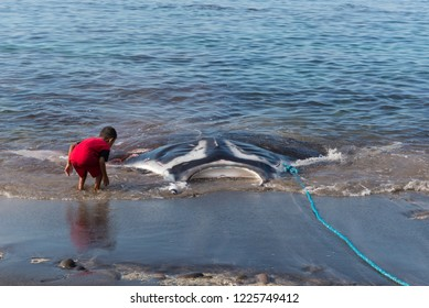 shark hunting in indonesia