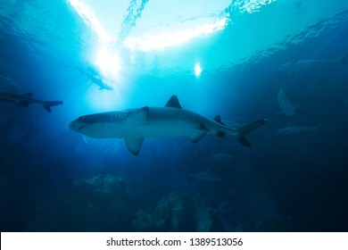 Swimming with Sharks Images, Stock Photos & Vectors