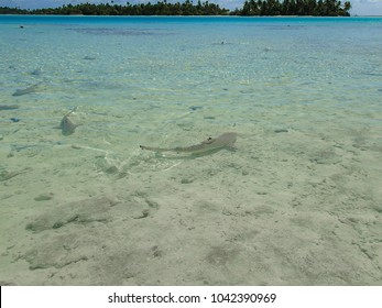 Shark at Pacific lagoon