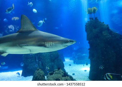 Shark posing in the deep blue water