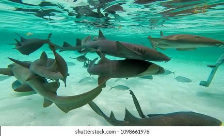 Shark Ray Alley, Caye Caulker, Sand Pedro, Belize