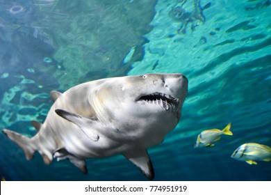 Shark at Ripley's Aquarium of Canada