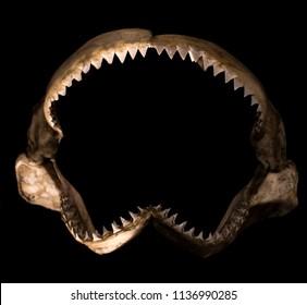 shark teeth, Shark Jaw