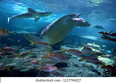 Shark, turtle and fish variety underwater with strong highlights