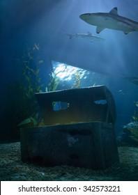 shark underwater in the deep blue sea with hidden treasures on ground