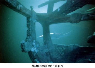 Shark w/ wreck