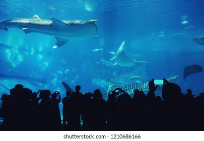 Shark whales, stingray and other fishes swimming in the aquarium in Okinawa, Japan. Silhouette people standing, watching the fish tank.