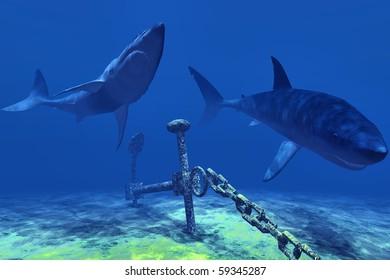 Sharks & anchor