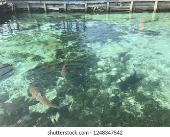 Sharks in the clear watercolor pool, Karimunjawa island, Central Java Indonesia
