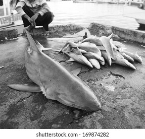 sharks dead at fish market - shark fin