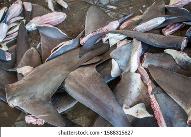 Sharks Fins from illegal fishing, endangered species.