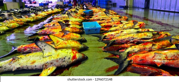 Sharks are lined up for auction at the fish market in Kesennuma, Miyage-ken, Japan
