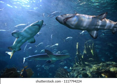 Sharks and other species of fish underwater