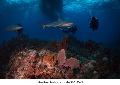 Sharks over a Tropical Reef