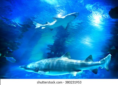 Sharks and small fish swimming in aquarium - deep blue shades