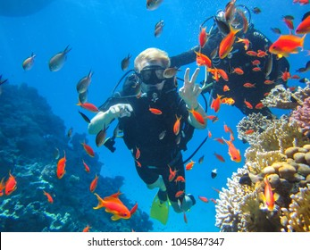 Sharm El Sheikh, Sinai / Egypt - 11 02 2016: Divers on holiday in Egypt. Active fascinating holiday in Sharm El Sheikh, Egypt. Colorful fish underwater reefs of the Red Sea