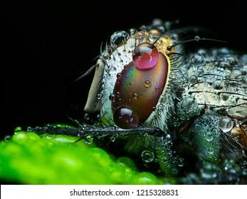 Plague of Flies Images, Stock Photos & Vectors | Shutterstock