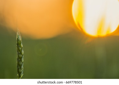 Sharp grass on foreground with blurry sunset on background