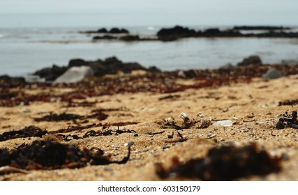Sharp rocky beach