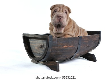 Shar-Pei curious puppy sitting in Half Wine Barrel Boat isolated on white background